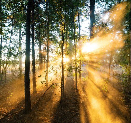 Els conreu dels boscos pot contribuir a l'increment de l'autoproveïment.